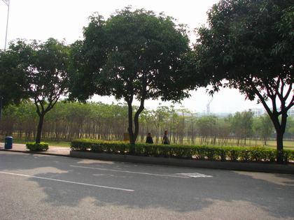 烟雨路,被喻为广州绿岛.二沙岛内,很多绿色,空气清新.